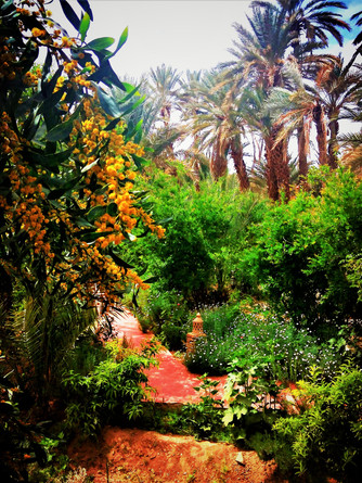 Jardin Luxuriant en Palmeraie à Agdz