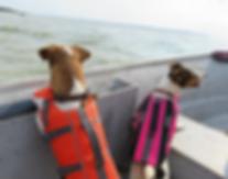Jack Russell Terrier outdoor plein-air