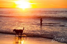 backbeach - dog and surfer at sunset.jpg