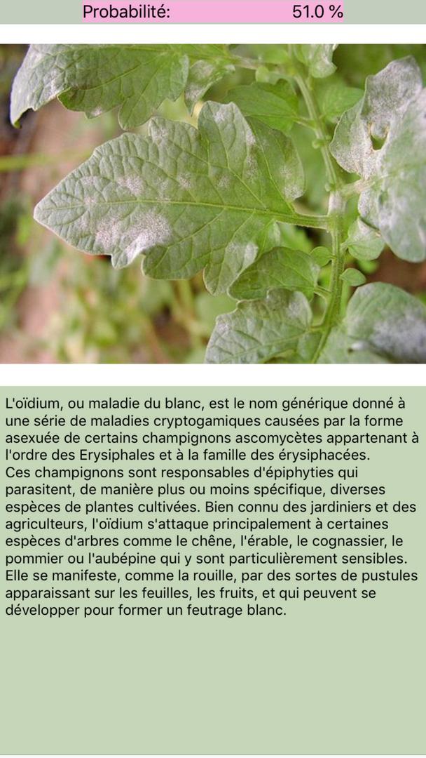Maladies des plantes - résultat