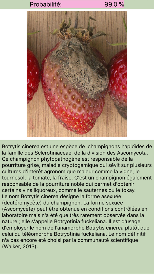 Maladies des plantes - fruits