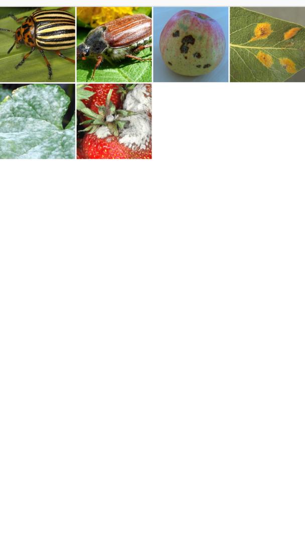 Maladies des plantes - selectionez und photo