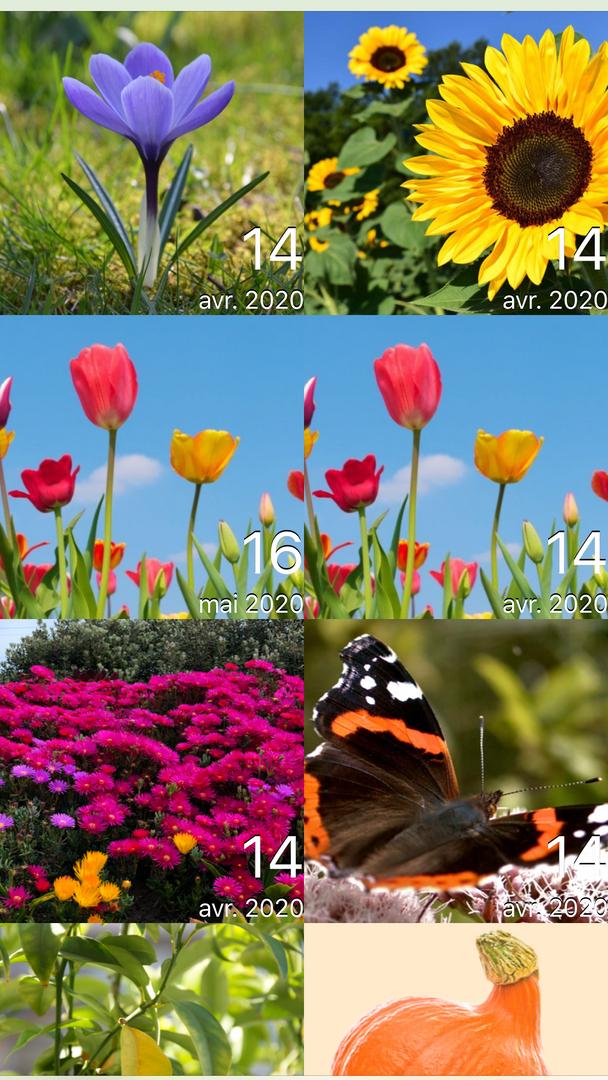 Mon année de jardin
