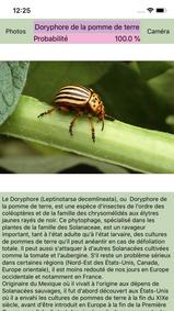 Maladies des plantes - ravageurs