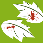 Plants diseases and pests