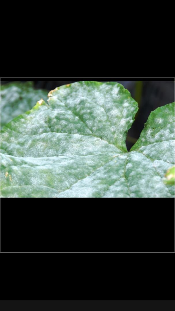 Maladies des plantes - verifiez la phozo