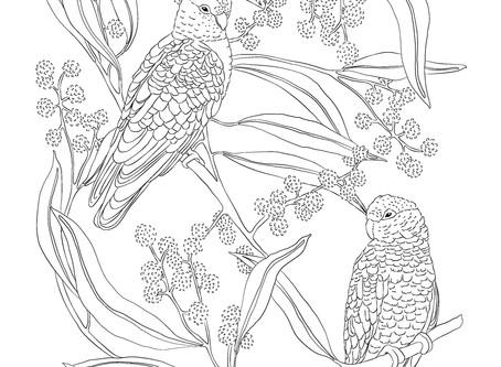 Free printable 'Galahs in the Wattle Tree'