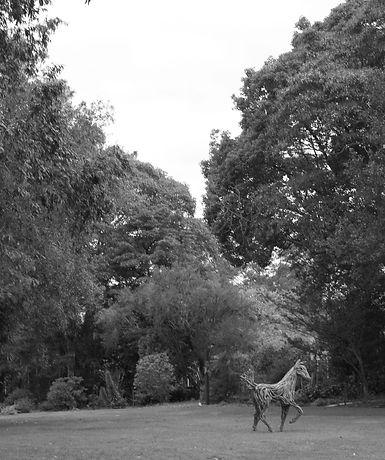 Timber Bronze horse sculptures