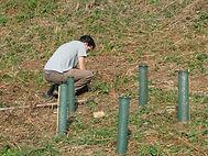 woodland planting (7).JPG