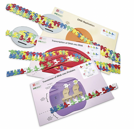 Flow of Genetic Information Kits