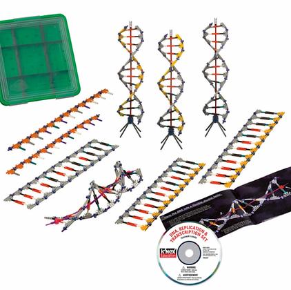 DNA, Replication and Transcription Set