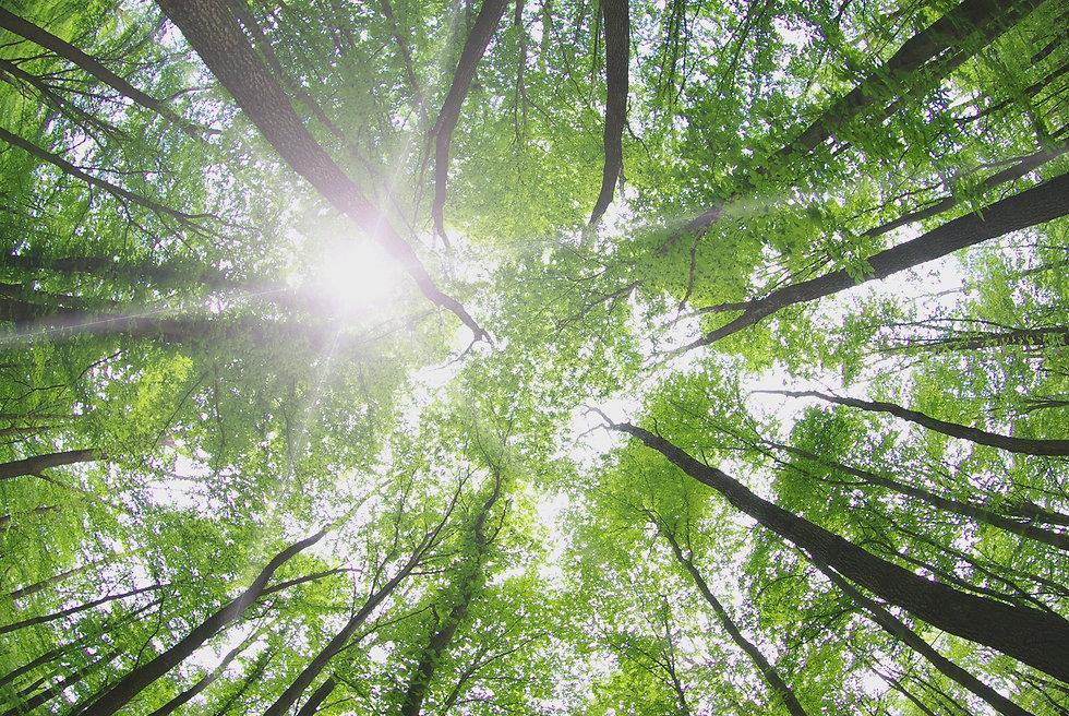 view of bright sky through dense trees