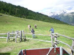 Erste Bilder 2008-07-14DSCN0218