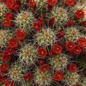 Cactus color explosion