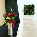 Living plant wall