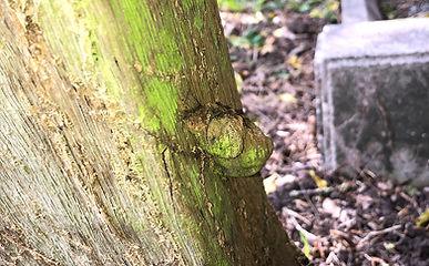 Grimston Church Wooden Cross