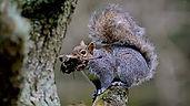 Squirrel 1.jpeg