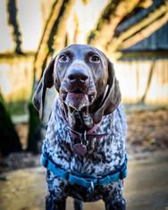 Waggingtons Love Dogs00003.jpg