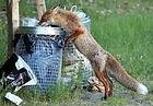 Fox 4.jpeg