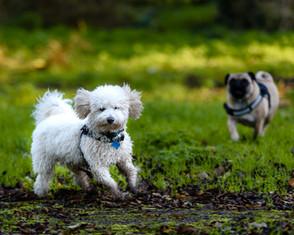 Waggingtons Love Dogs00009.jpg