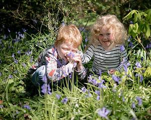 Blue bells - Spring