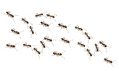 Ants PNG.png