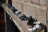 Pigeon 3.jpeg