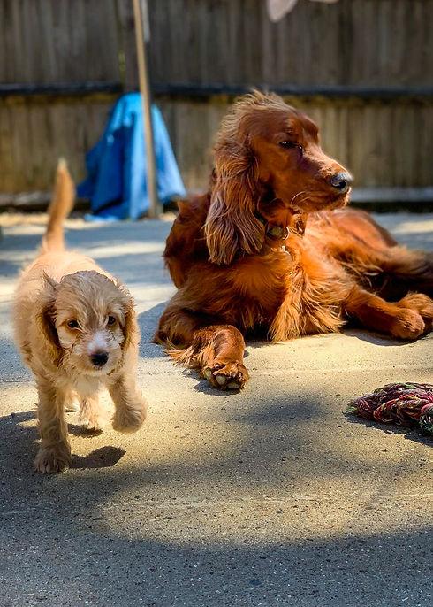 Waggingtons Love Dogs 00204.jpg