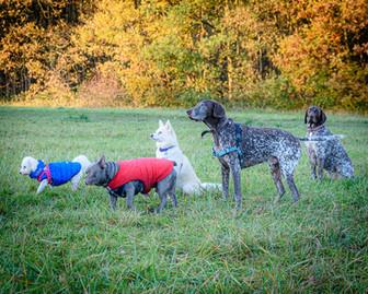 Waggingtons Love Dogs00017.jpg