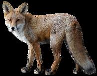 Fox 1.png