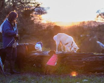 Waggingtons Love Dogs00037.jpg
