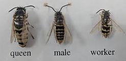 Wasps 2.jpeg