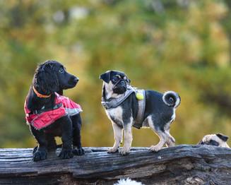 Waggingtons Love Dogs00036.jpg