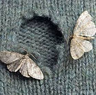 Moth 3.jpeg