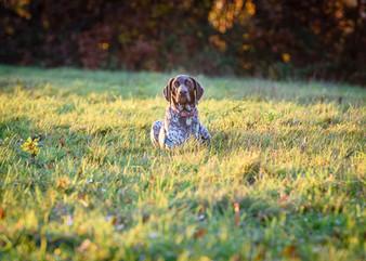 Waggingtons Love Dogs00029.jpg