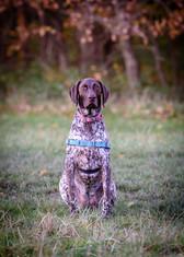 Waggingtons Love Dogs00016.jpg