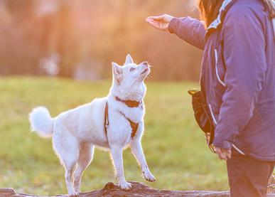 Waggingtons Love Dogs00038.jpg