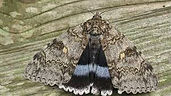 Moth 2.jpeg