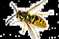 Wasps 2.png