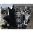 kittens-1.png