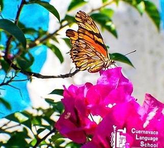 Mariposa, flores, bugambilia, Cuernavaca, CLS, Spanish classes