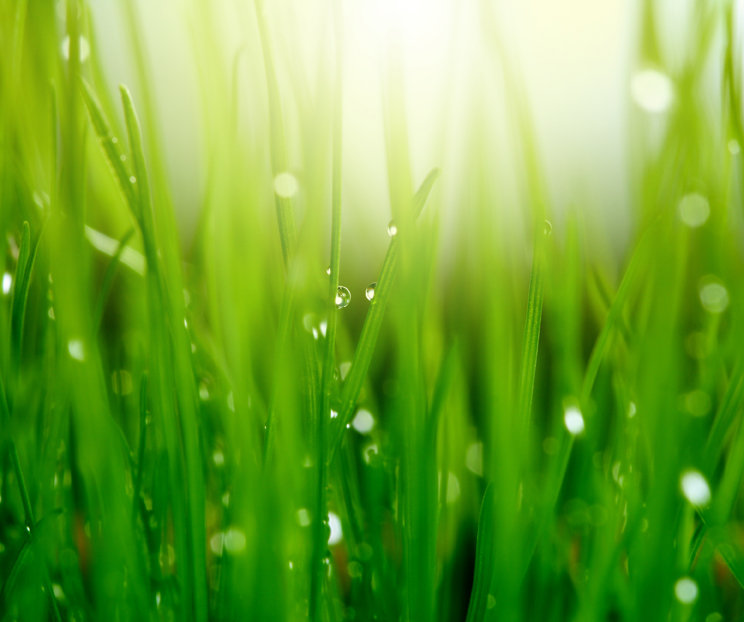 Hierba con rocío