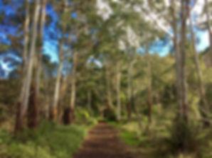 unknown path 2.jpg