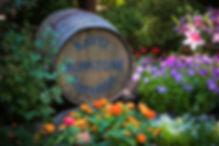 Ironstone-Vineyards-15300-bulbs-planted.