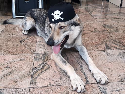 Journée internationale du chien : concours !
