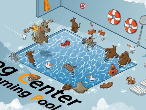 Dog Pool : 50% de réduction pour une nage avec votre chien !