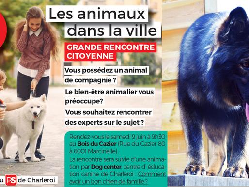 Les animaux dans la ville : rencontre citoyenne
