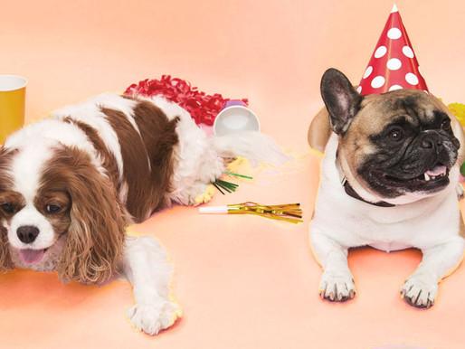 Concours : les deux ans du Dog Center !