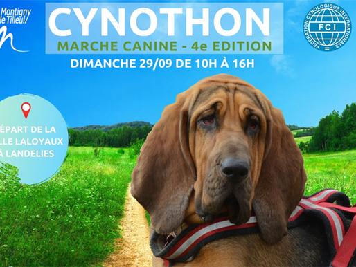 Activités : Cynothon 2019 !