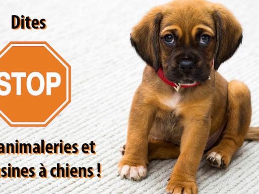 Bien-être canin: Stop aux animaleries et usines à chiens !